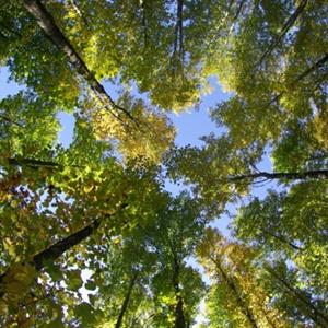 Maxwood Luxembourg Specialiste Construction Bois 5 Bonnes Raisons Ecologie, MaxWood | Construction en bois
